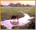 Cow In Stream